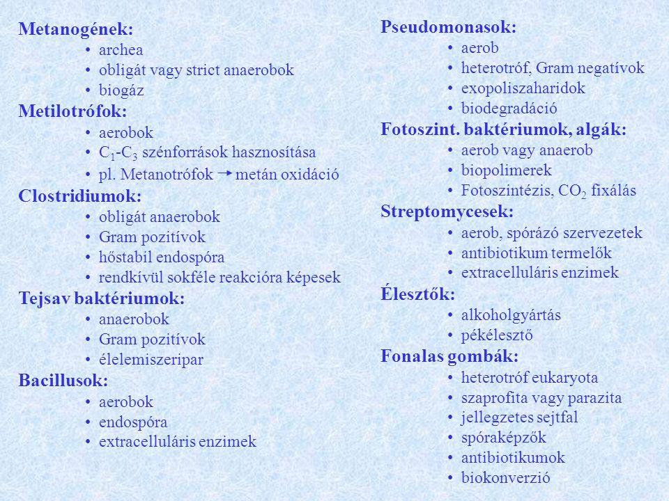 Fotoszint. baktériumok, algák: