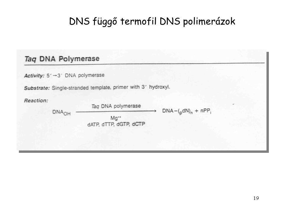 DNS függő termofil DNS polimerázok