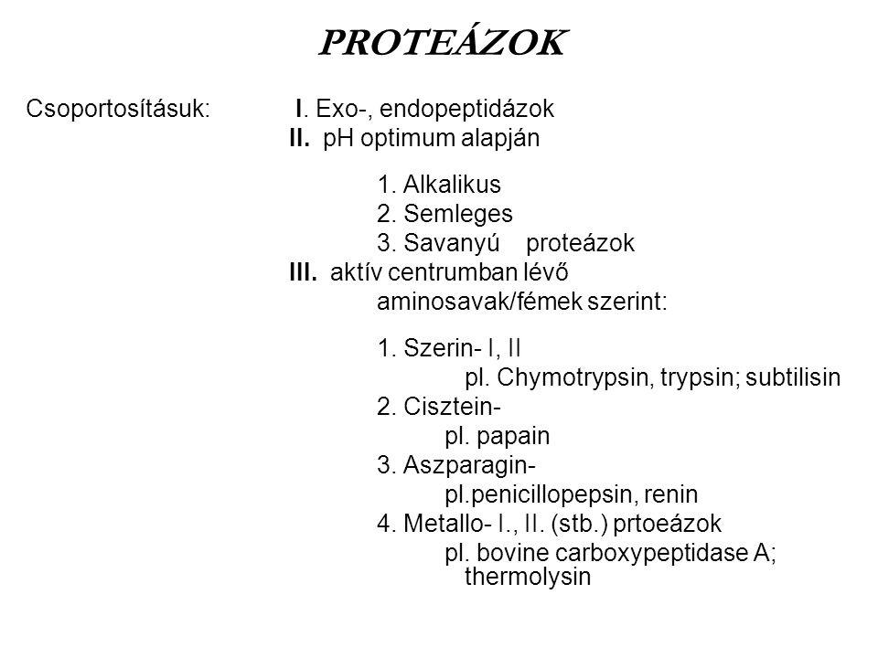 PROTEÁZOK Csoportosításuk: I. Exo-, endopeptidázok