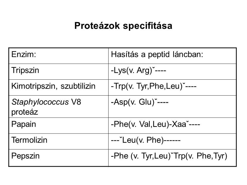 Proteázok specifitása
