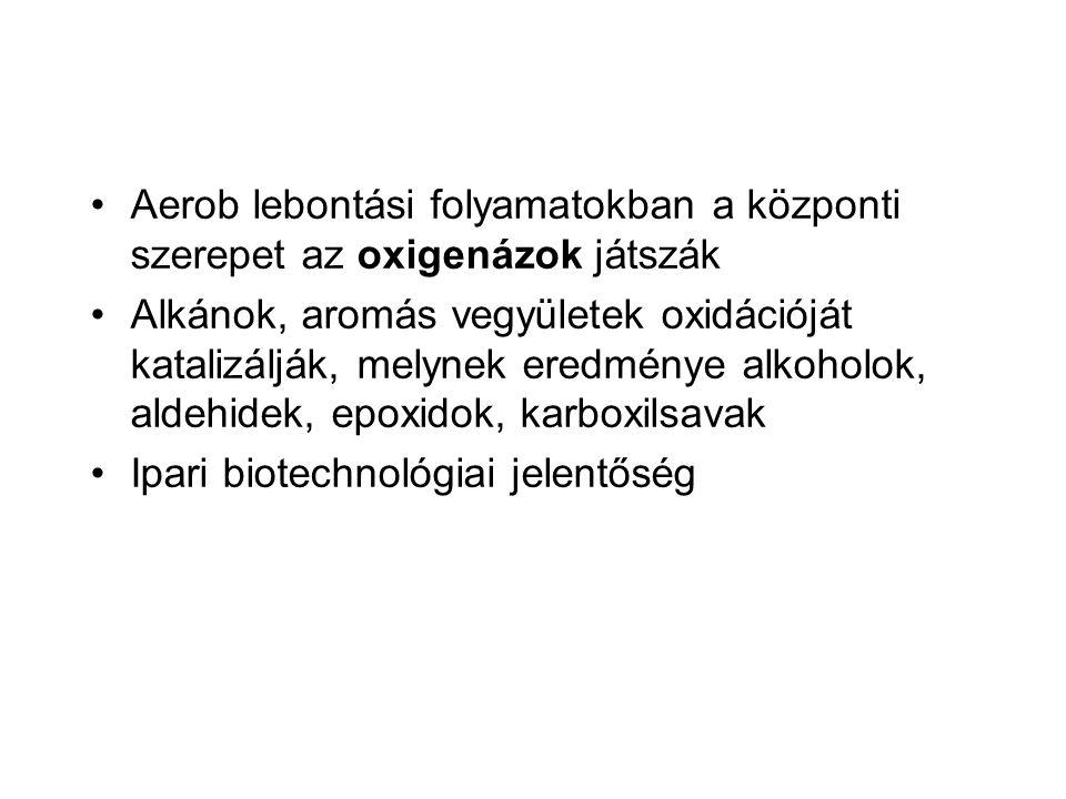 Aerob lebontási folyamatokban a központi szerepet az oxigenázok játszák