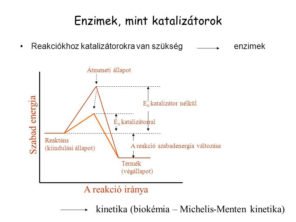 Enzimek, mint katalizátorok