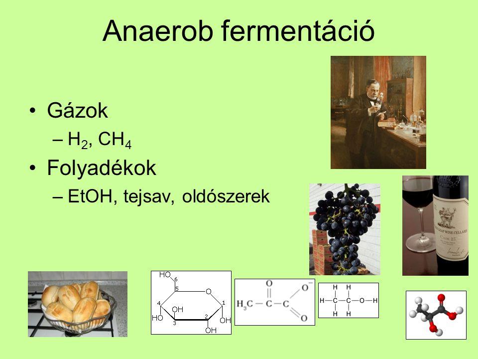 Anaerob fermentáció Gázok H2, CH4 Folyadékok EtOH, tejsav, oldószerek
