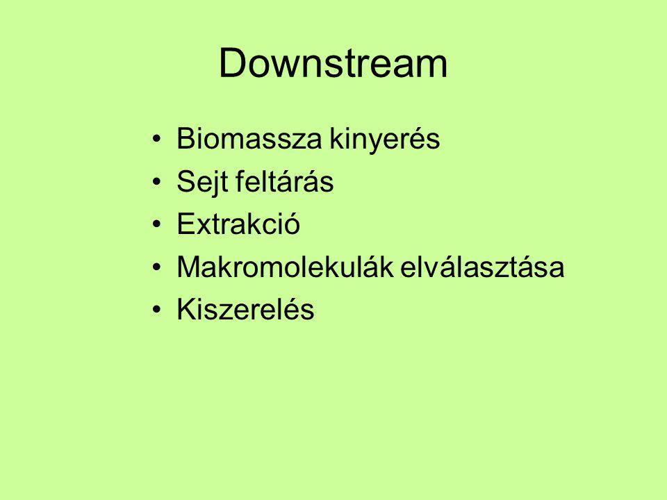 Downstream Biomassza kinyerés Sejt feltárás Extrakció