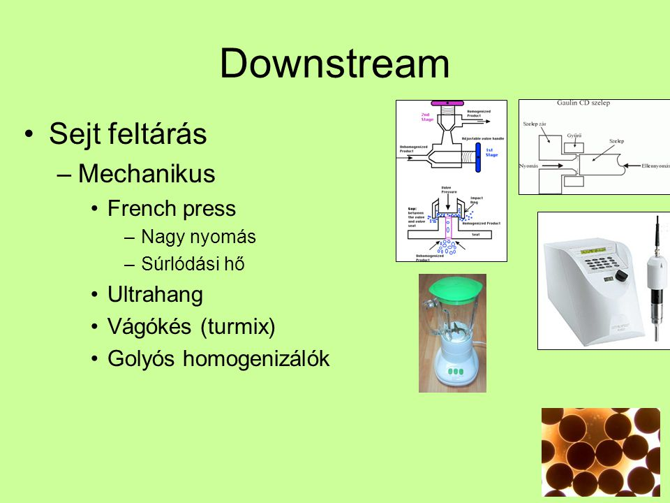 Downstream Sejt feltárás Mechanikus French press Ultrahang