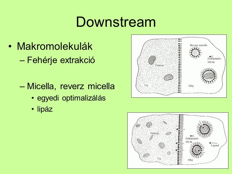 Downstream Makromolekulák Fehérje extrakció Micella, reverz micella