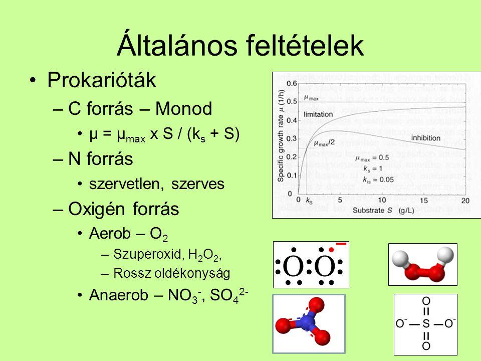 Általános feltételek Prokarióták C forrás – Monod N forrás
