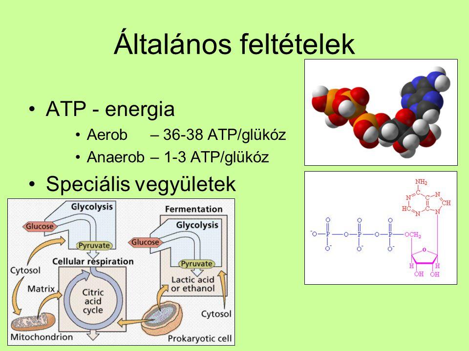 Általános feltételek ATP - energia Speciális vegyületek