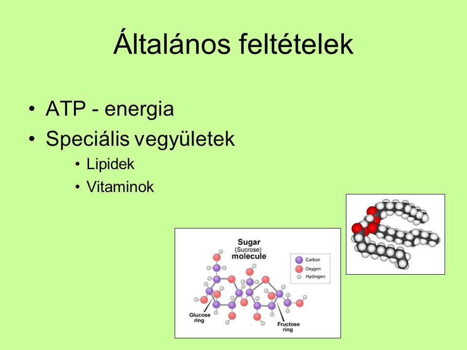 Általános feltételek ATP - energia Speciális vegyületek Lipidek
