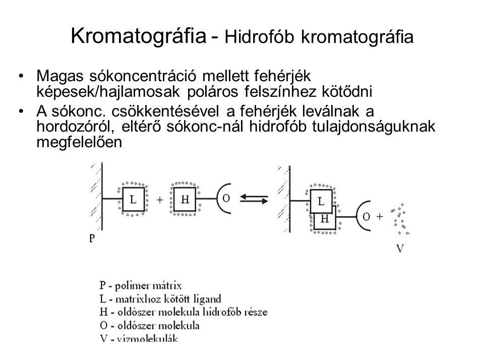Kromatográfia - Hidrofób kromatográfia