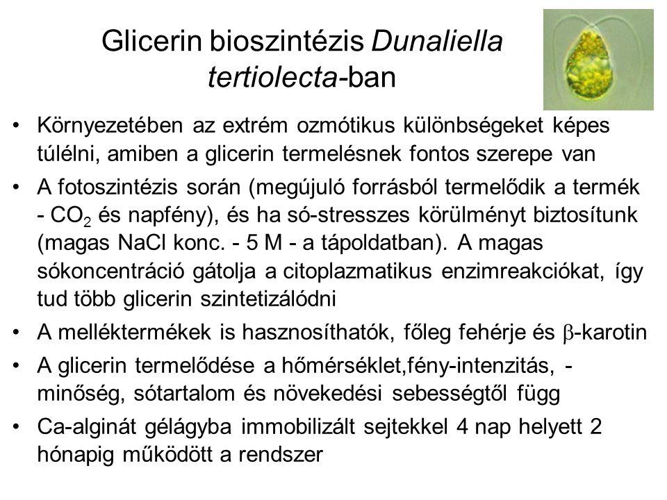Glicerin bioszintézis Dunaliella tertiolecta-ban