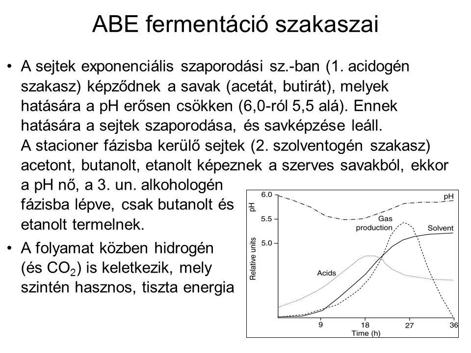 ABE fermentáció szakaszai