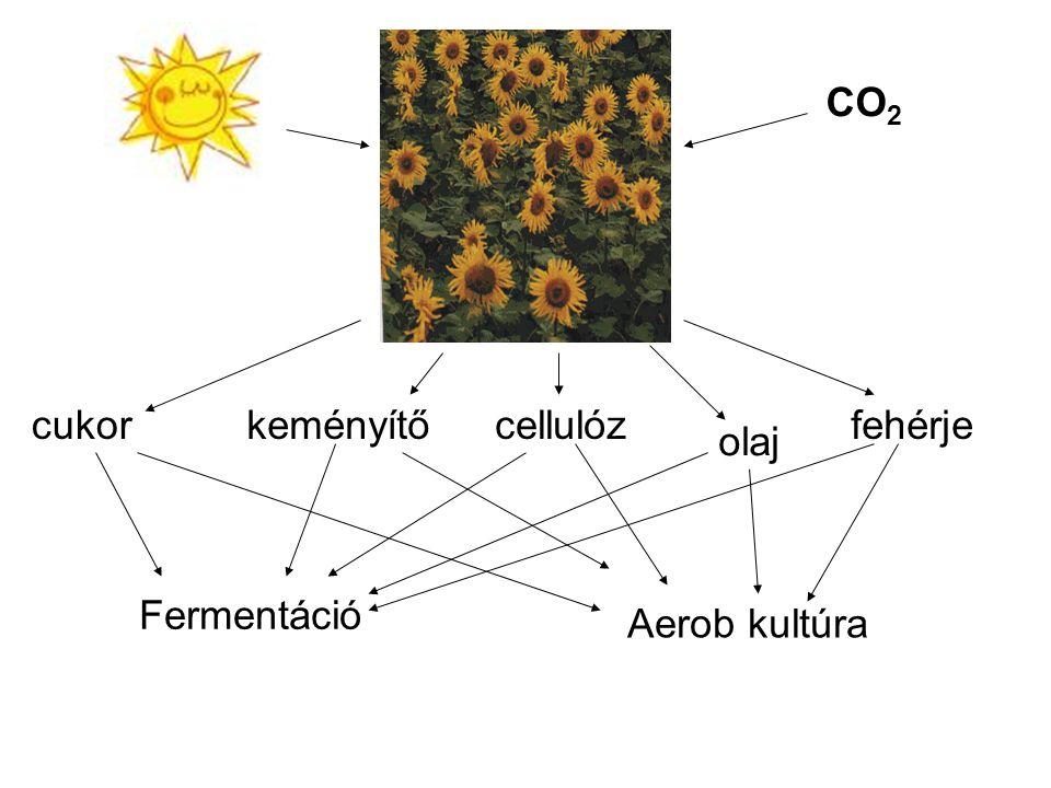 CO2 cukor keményítő cellulóz fehérje olaj Fermentáció Aerob kultúra