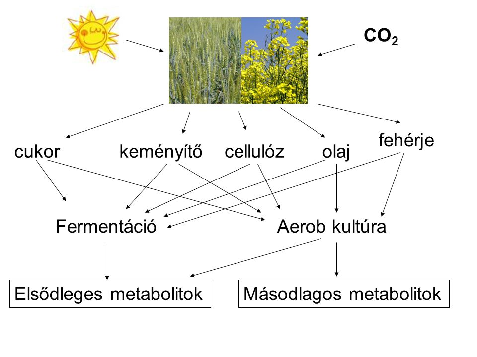 CO2 fehérje. cukor. keményítő. cellulóz. olaj. Fermentáció. Aerob kultúra. Elsődleges metabolitok.