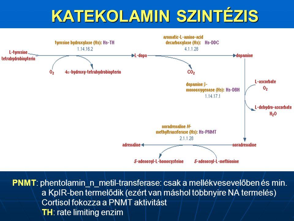 KATEKOLAMIN SZINTÉZIS