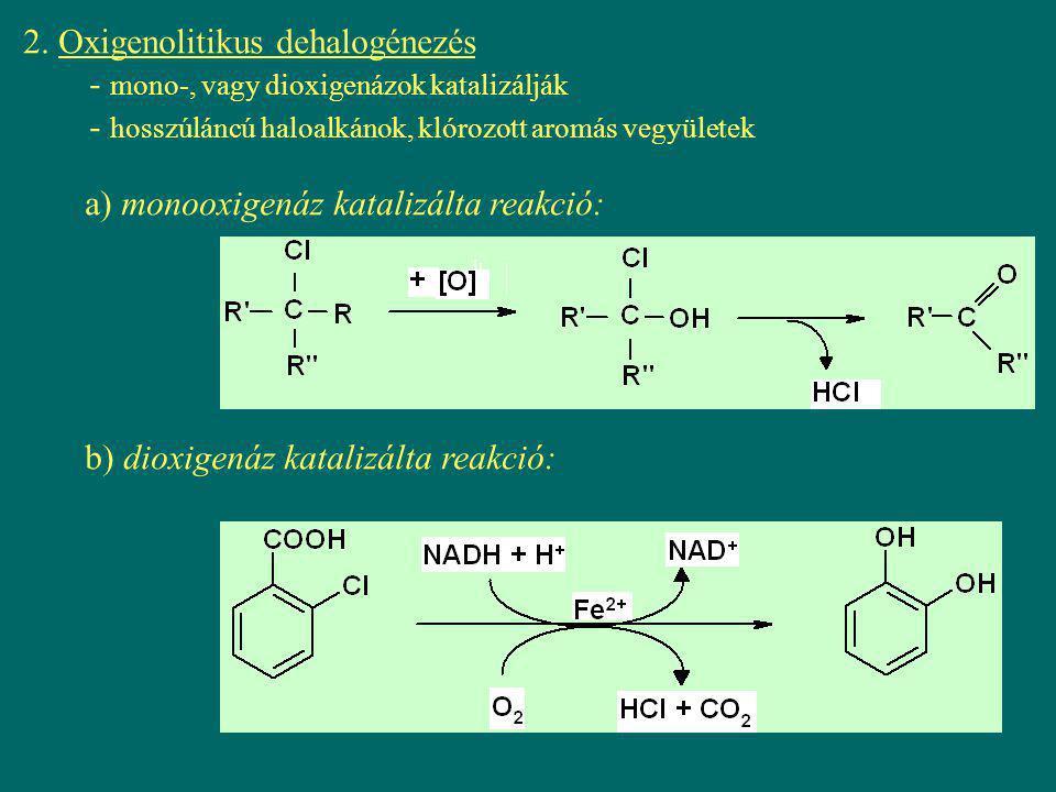 2. Oxigenolitikus dehalogénezés