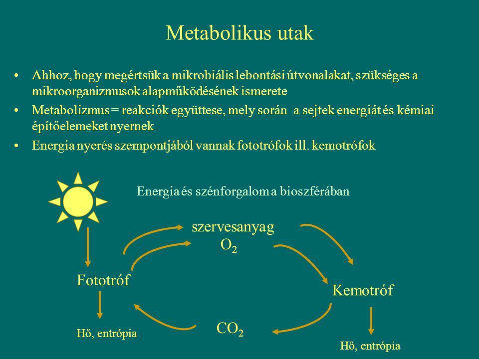Metabolikus utak szervesanyag O2 Fototróf Kemotróf CO2
