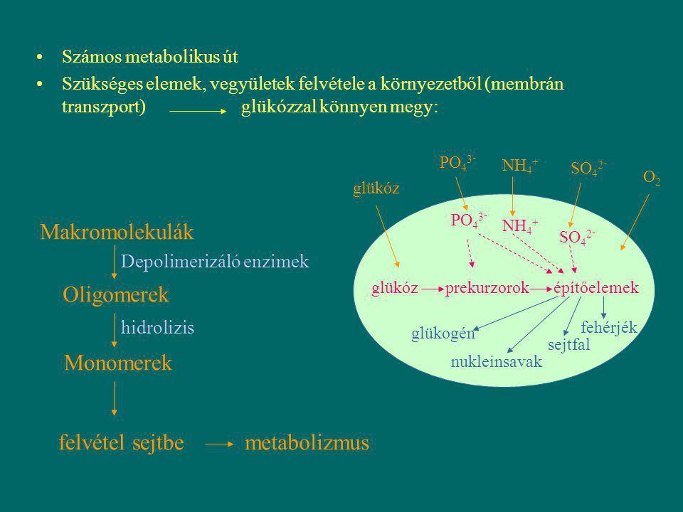 Makromolekulák Oligomerek Monomerek felvétel sejtbe metabolizmus