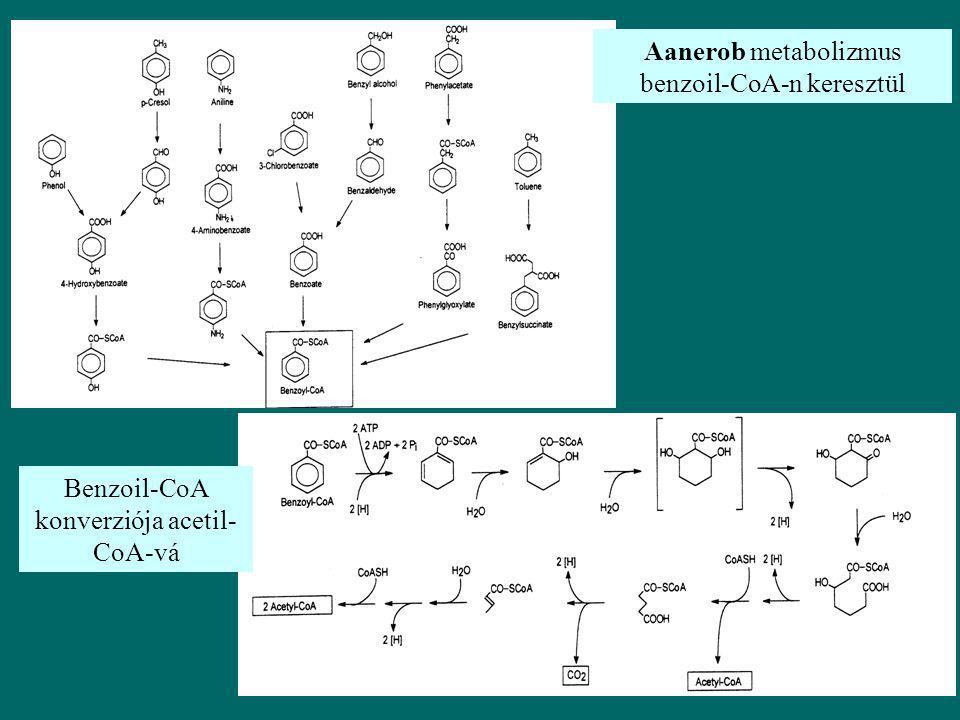 Aanerob metabolizmus benzoil-CoA-n keresztül