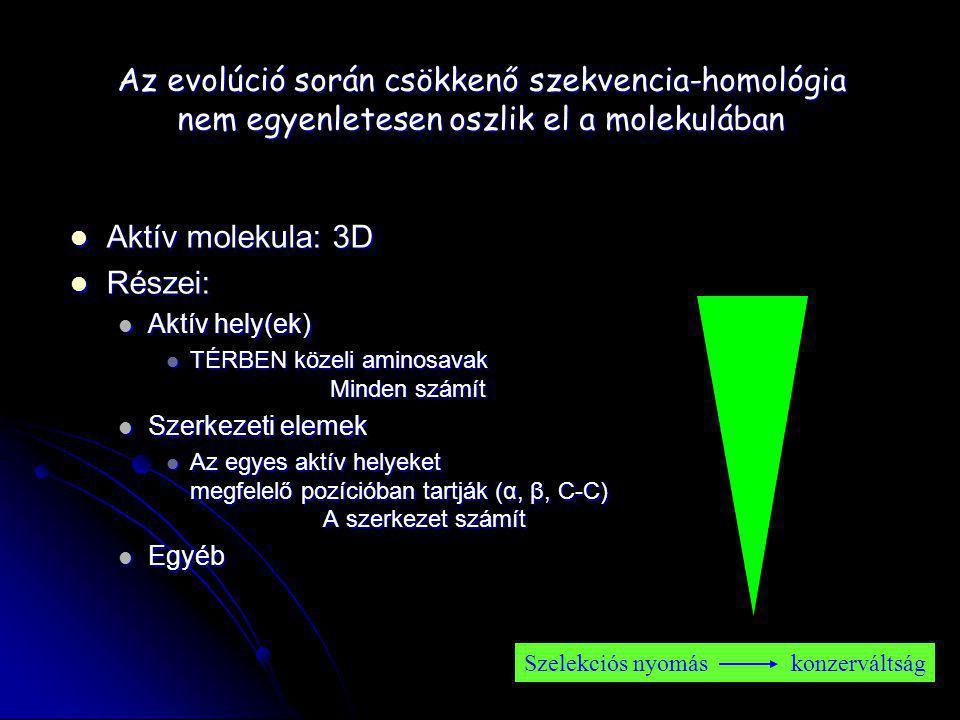 Az evolúció során csökkenő szekvencia-homológia nem egyenletesen oszlik el a molekulában