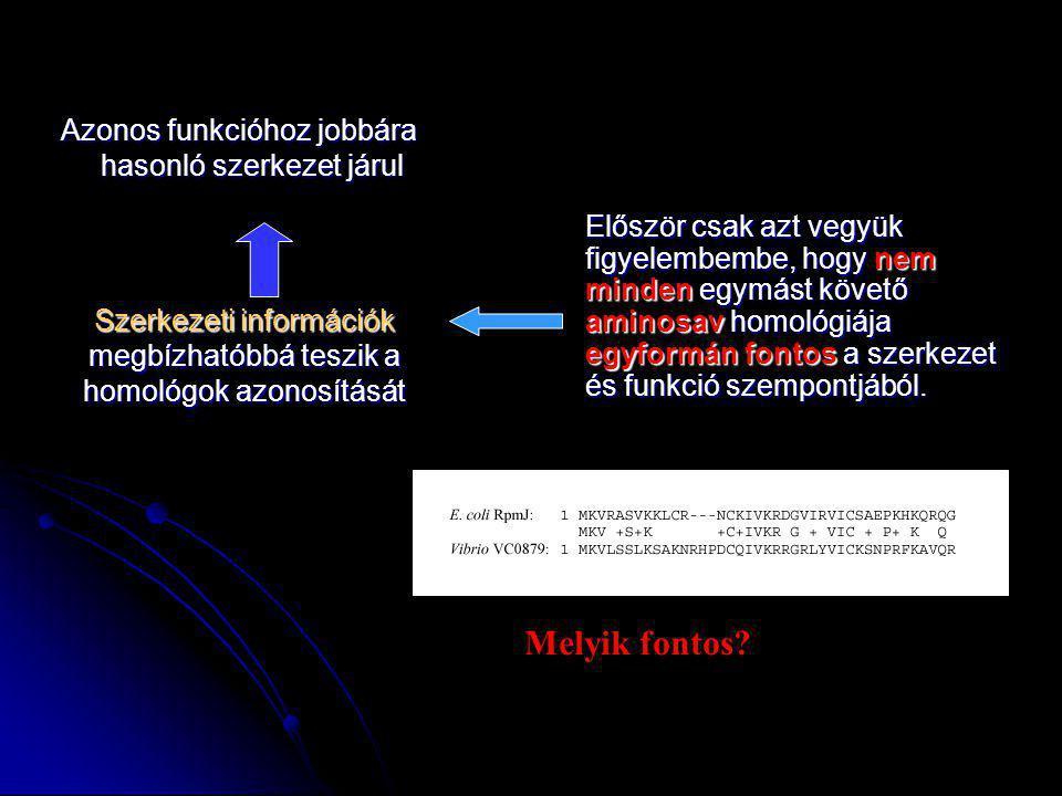 Szerkezeti információk megbízhatóbbá teszik a homológok azonosítását