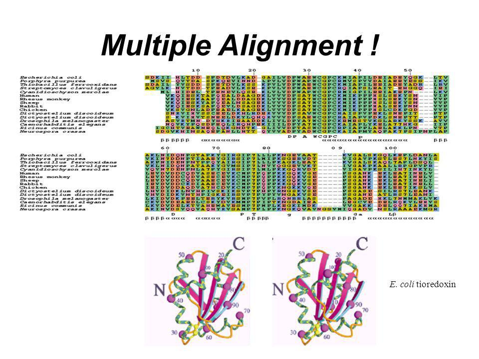 Multiple Alignment ! E. coli tioredoxin