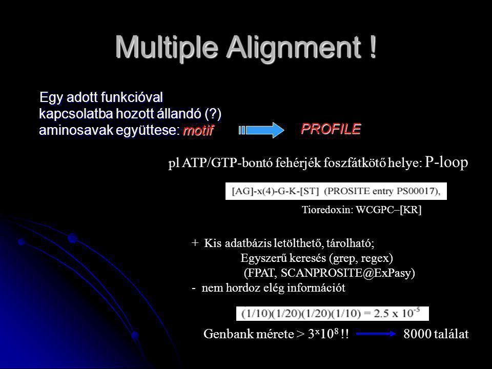 Multiple Alignment ! Egy adott funkcióval kapcsolatba hozott állandó ( ) aminosavak együttese: motif.