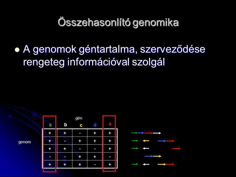 Összehasonlító genomika