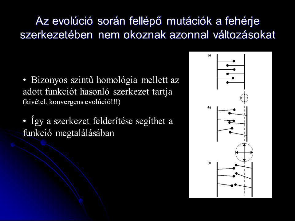 Az evolúció során fellépő mutációk a fehérje szerkezetében nem okoznak azonnal változásokat
