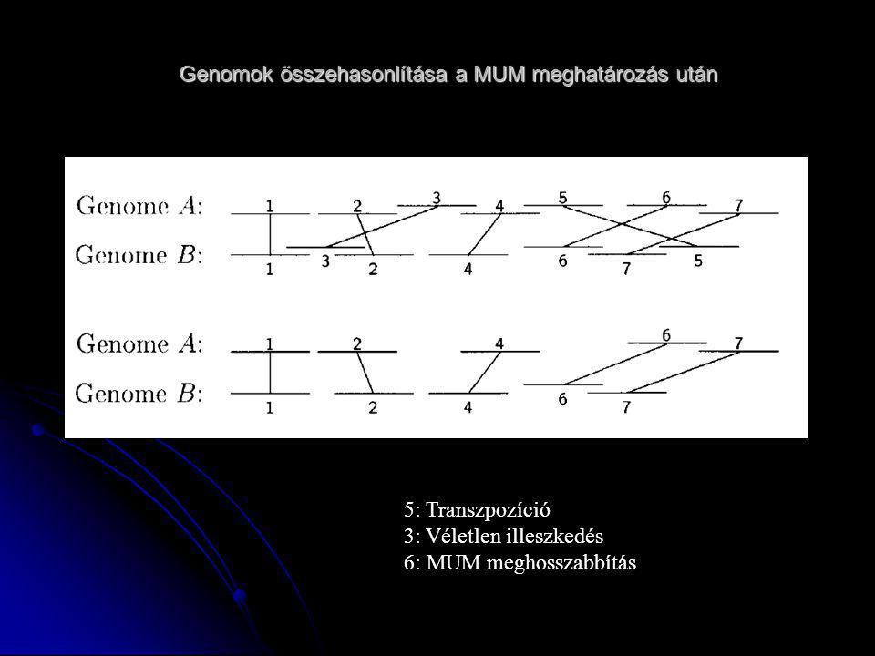 Genomok összehasonlítása a MUM meghatározás után