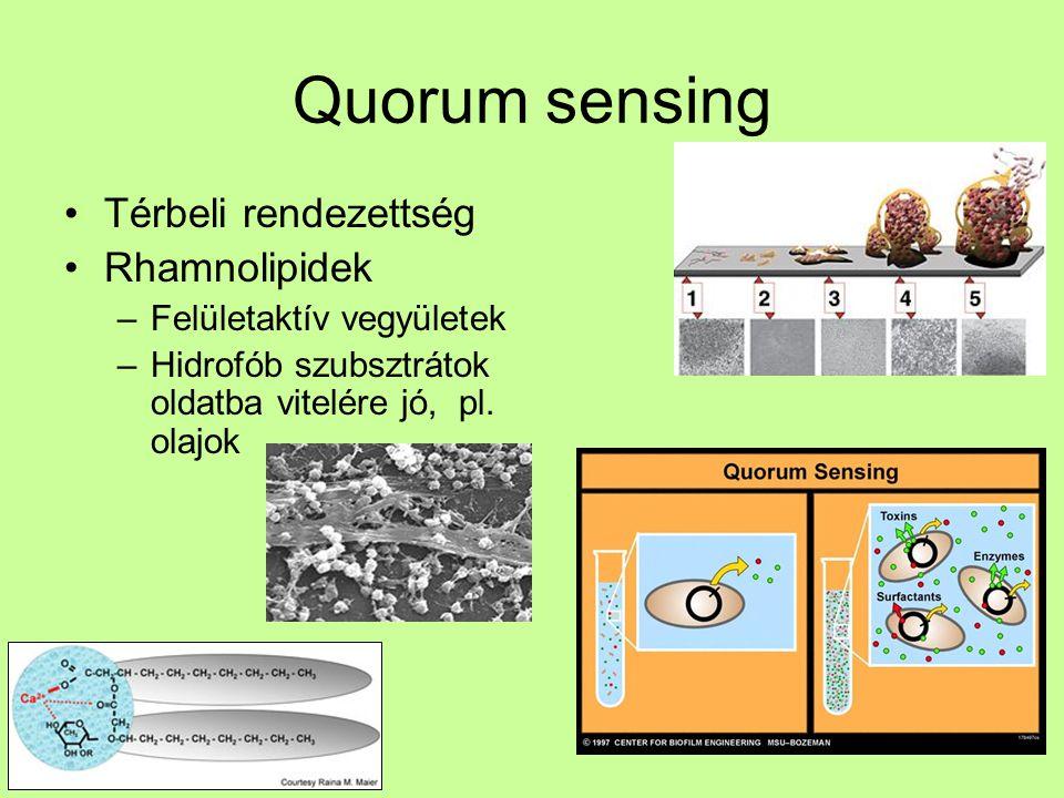Quorum sensing Térbeli rendezettség Rhamnolipidek