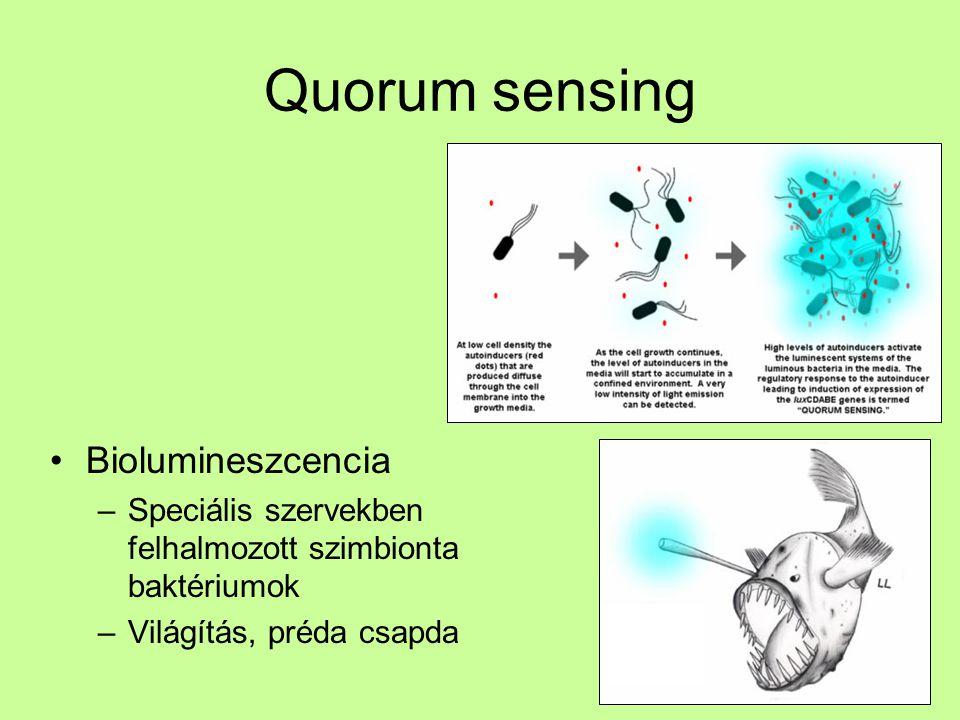 Quorum sensing Biolumineszcencia