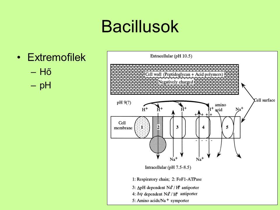 Bacillusok Extremofilek Hő pH