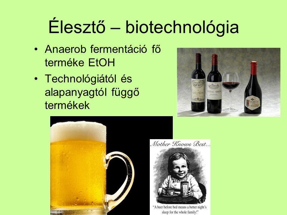 Élesztő – biotechnológia