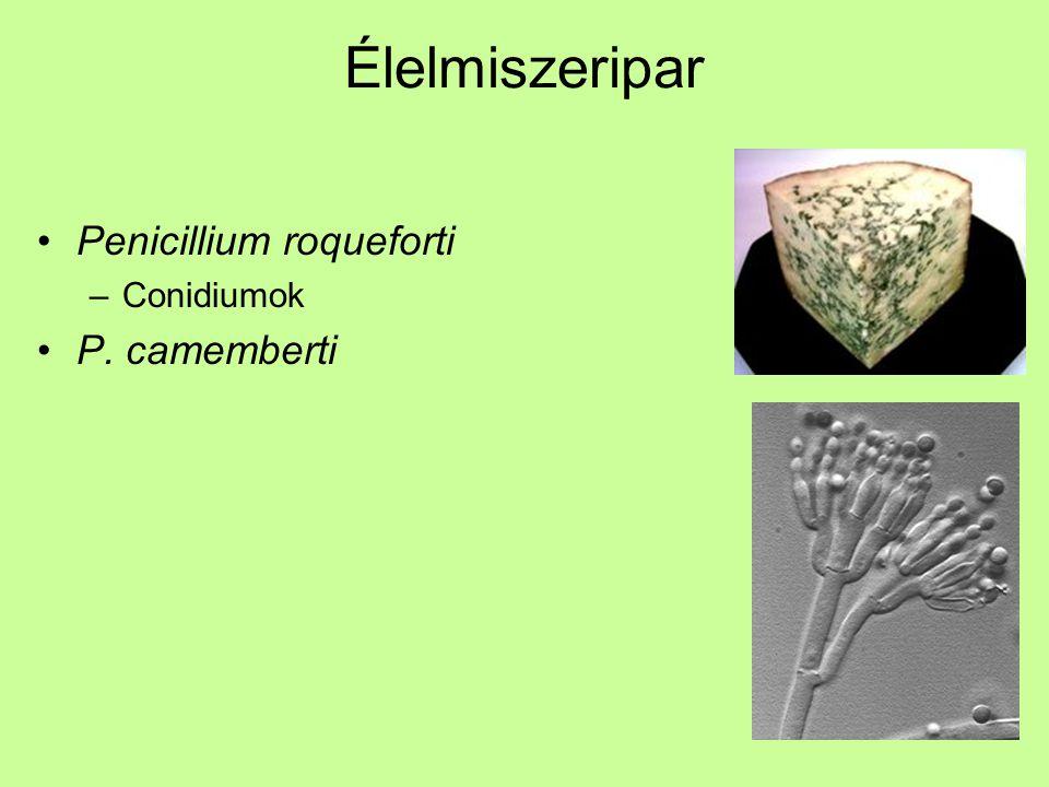Élelmiszeripar Penicillium roqueforti Conidiumok P. camemberti