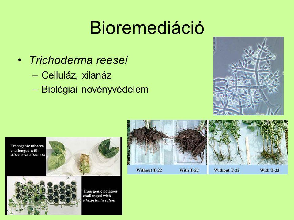 Bioremediáció Trichoderma reesei Celluláz, xilanáz