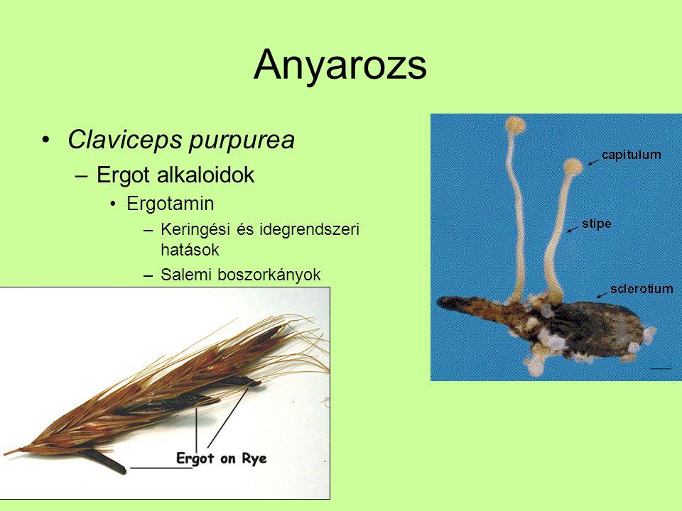 Anyarozs Claviceps purpurea Ergot alkaloidok Ergotamin