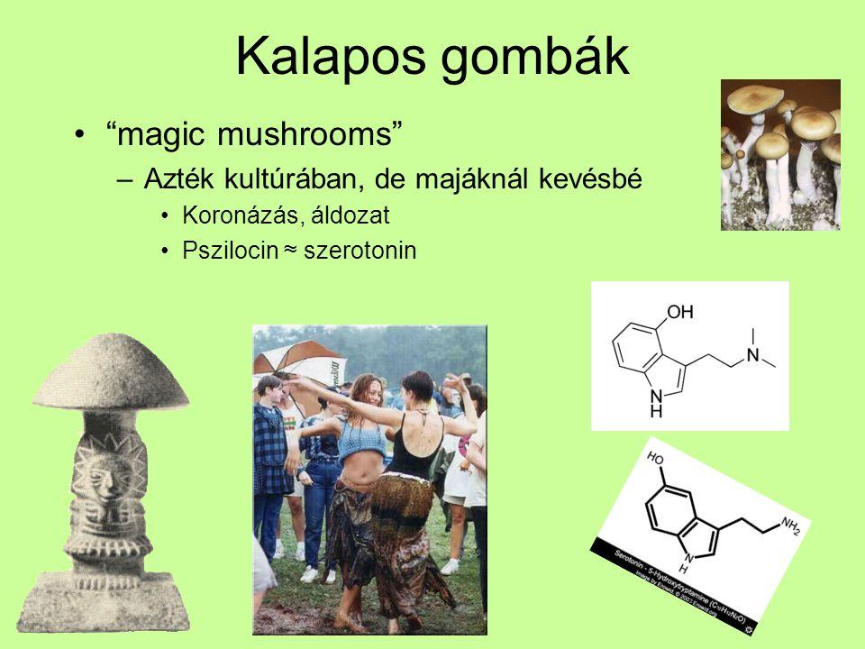 Kalapos gombák magic mushrooms Azték kultúrában, de majáknál kevésbé