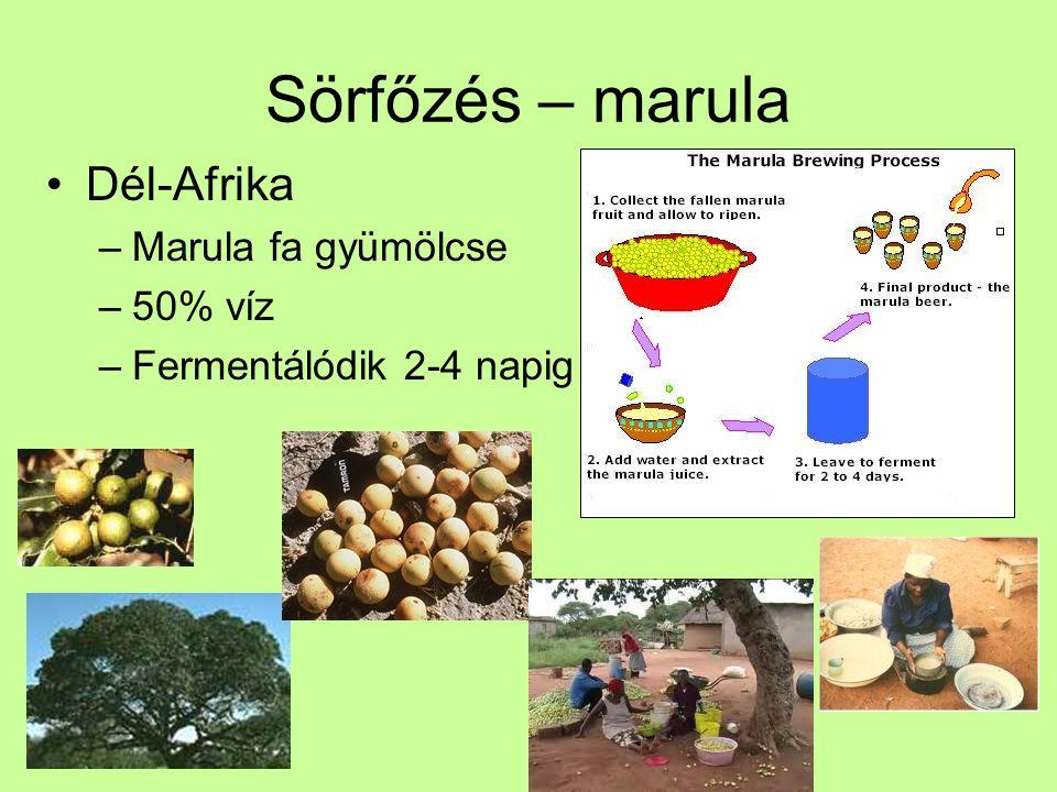 Sörfőzés – marula Dél-Afrika Marula fa gyümölcse 50% víz