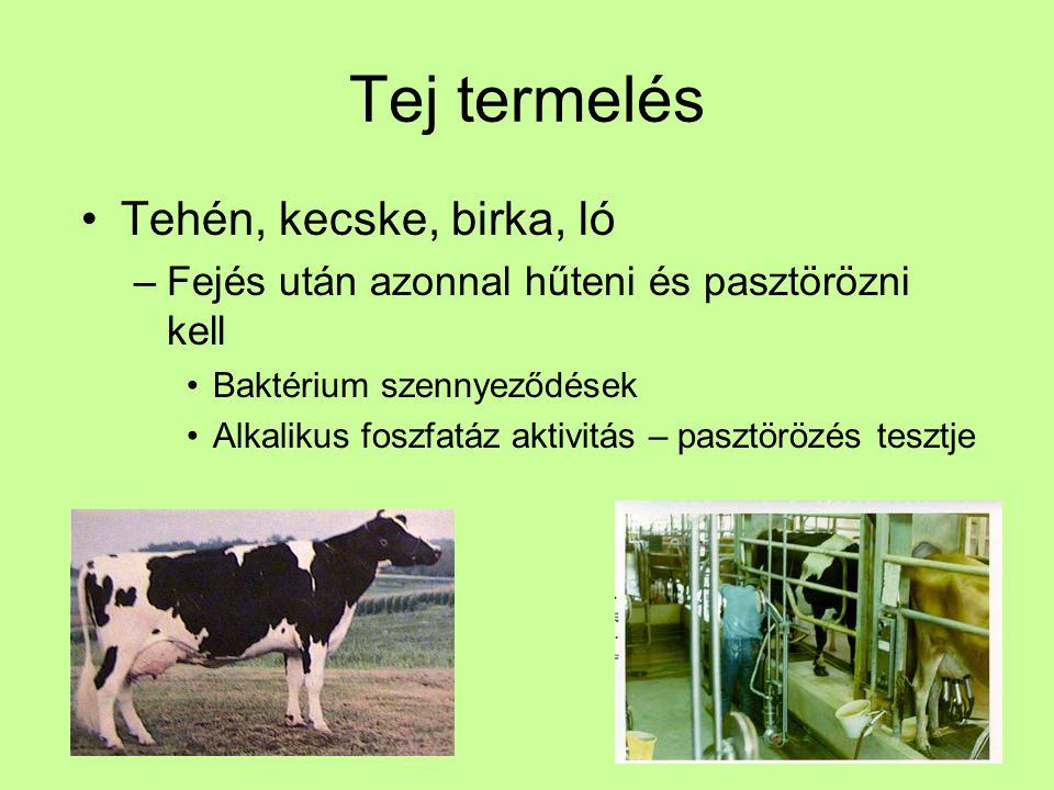 Tej termelés Tehén, kecske, birka, ló