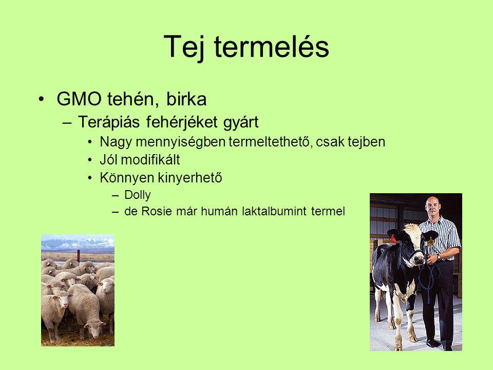 Tej termelés GMO tehén, birka Terápiás fehérjéket gyárt