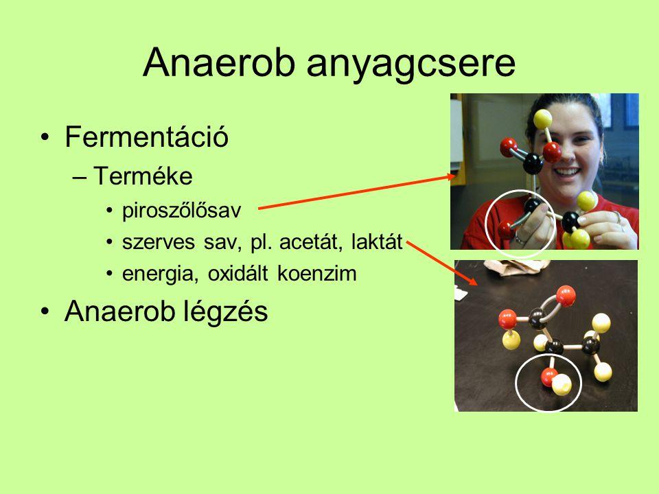 Anaerob anyagcsere Fermentáció Anaerob légzés Terméke piroszőlősav