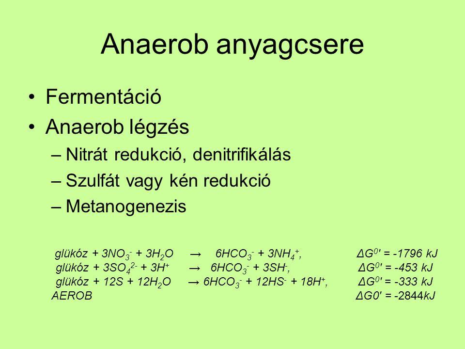 Anaerob anyagcsere Fermentáció Anaerob légzés
