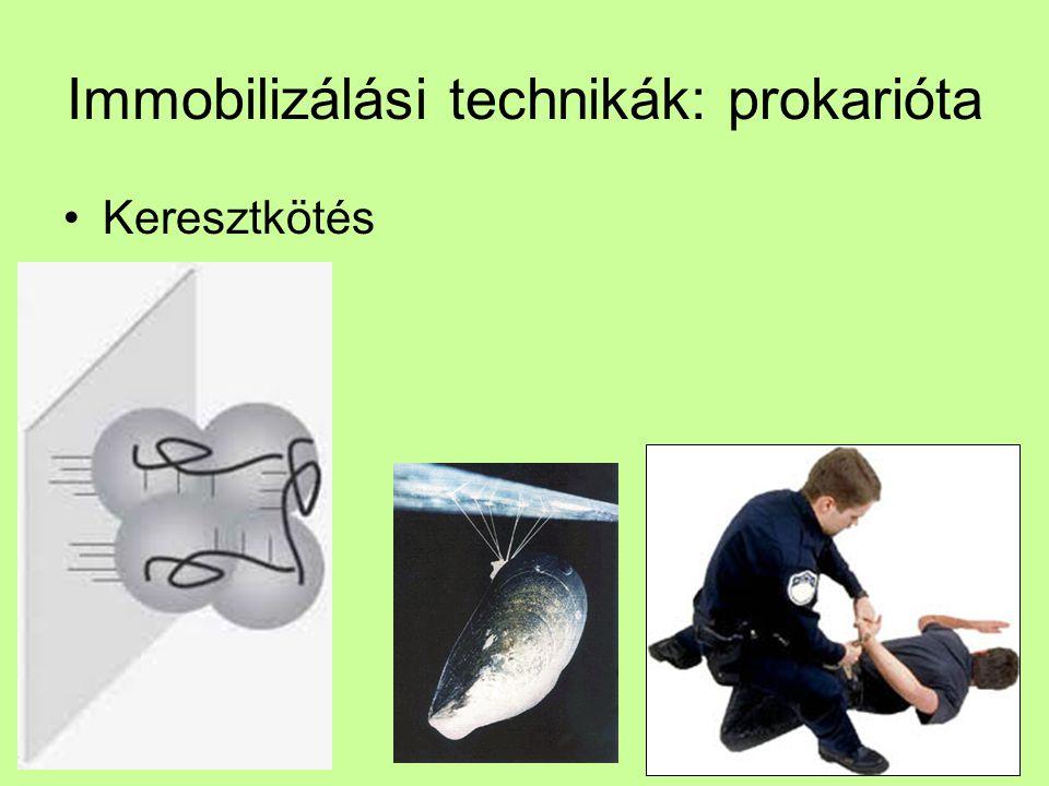 Immobilizálási technikák: prokarióta