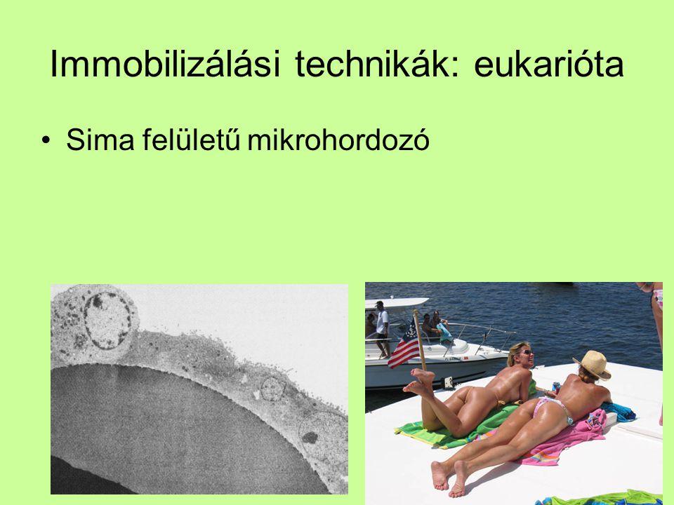 Immobilizálási technikák: eukarióta