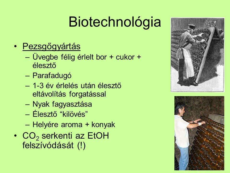 Biotechnológia Pezsgőgyártás CO2 serkenti az EtOH felszívódását (!)