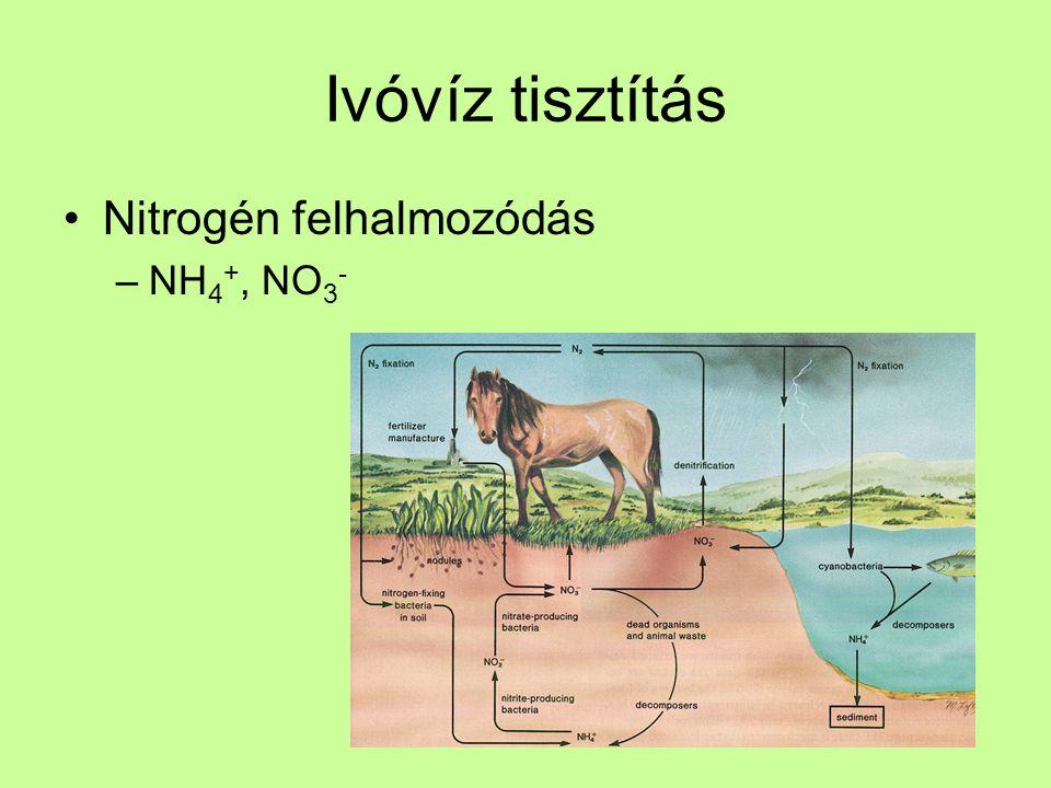 Ivóvíz tisztítás Nitrogén felhalmozódás NH4+, NO3-