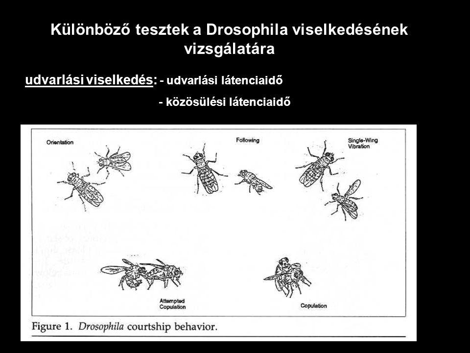 Különböző tesztek a Drosophila viselkedésének vizsgálatára