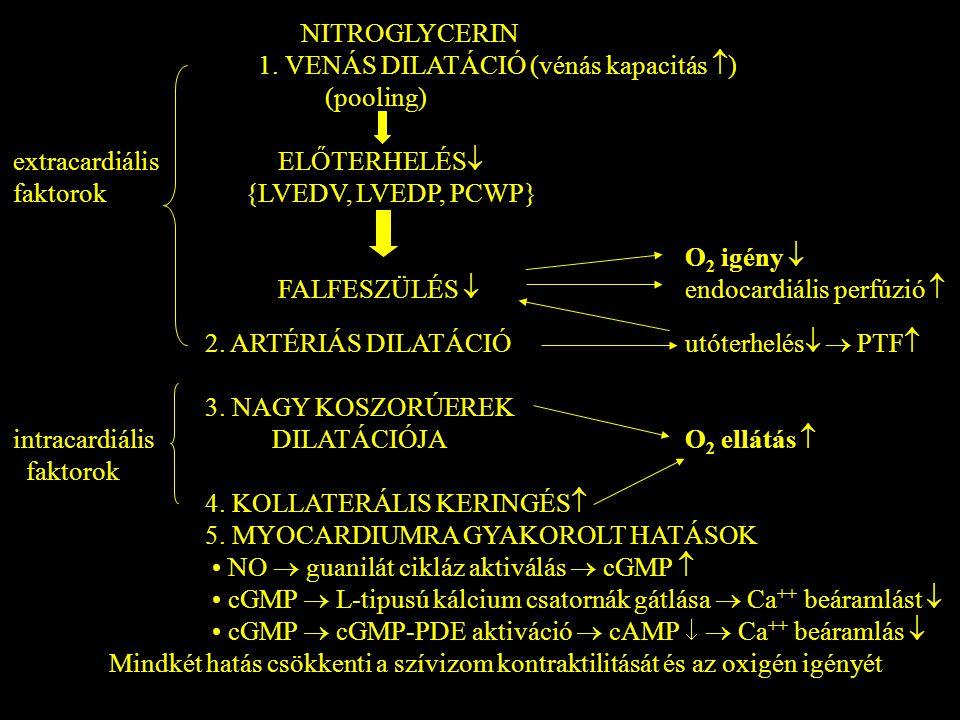 NITROGLYCERIN 1. VENÁS DILATÁCIÓ (vénás kapacitás ) (pooling) extracardiális ELŐTERHELÉS
