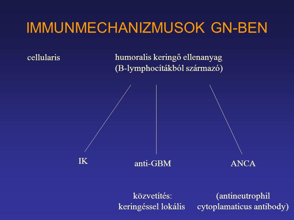 IMMUNMECHANIZMUSOK GN-BEN